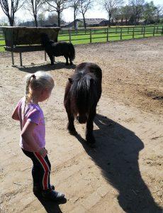 Kennismaken met de paarden - Pony Power voor Kids